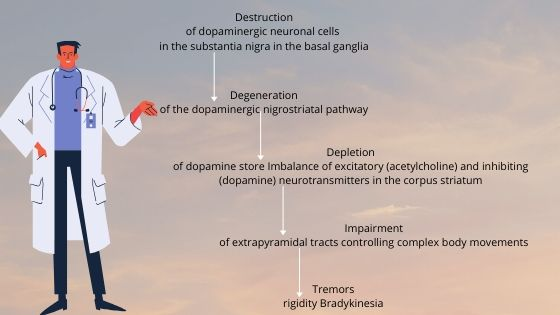 Destruction of dopaminergic neuronal cells in the substantia nigra in the basal ganglia-min