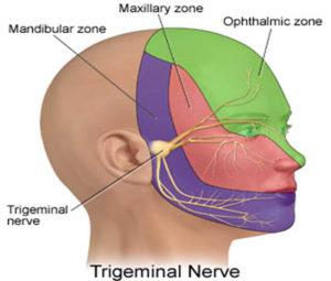 Distribution of Trigeminal nerve.