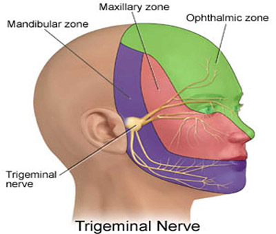 Distribution of Trigeminal nerve.
