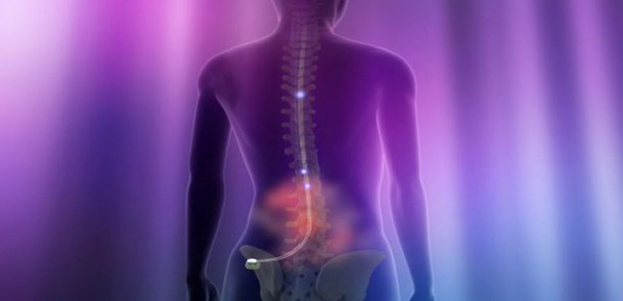 Human Spinal Cord